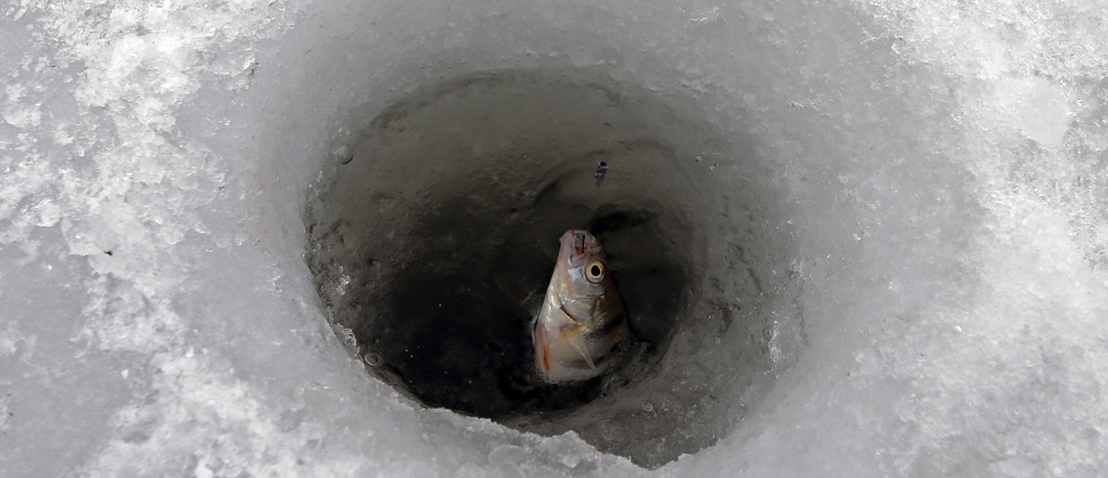 A small fish is caught on a frozen lake near Bucharest as cold winter temperatures hit southern Romania February 3, 2014. REUTERS/Bogdan Cristel (ROMANIA  - Tags: ENVIRONMENT SOCIETY) - GM1EA231T7N01