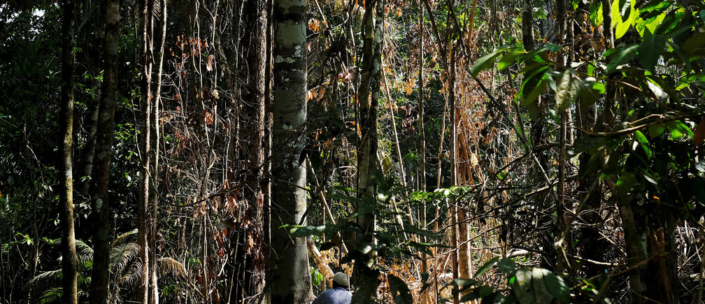 A man cuts down a tree with a chainsaw in a forest near the municipality of Itaituba, Brazil August 7, 2017. Picture taken August 7, 2017. REUTERS/Nacho Doce - RC1110003590