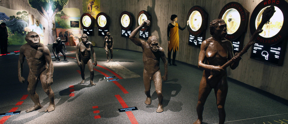 A timeline of human evolution, illustrated by life-size statues of our ancestors, is displayed in the new Neanderthal Museum in the northern Croatian town of Krapina February 25, 2010.  The museum opened last week and was built on the site where scientists have found the greatest concentration in Europe of Neanderthal remains, the bones, skulls, tools and other effects of an extinct offshoot of mankind who inhabited parts of Asia and Europe until 30,000 years ago.  Picture taken February 25, 2010.  To match Reuters Life! NEANDERTHAL-CROATIA/MUSEUM  REUTERS/Nikola Solic (CROATIA - Tags: SOCIETY SCI TECH) - GM1E6311Q3801