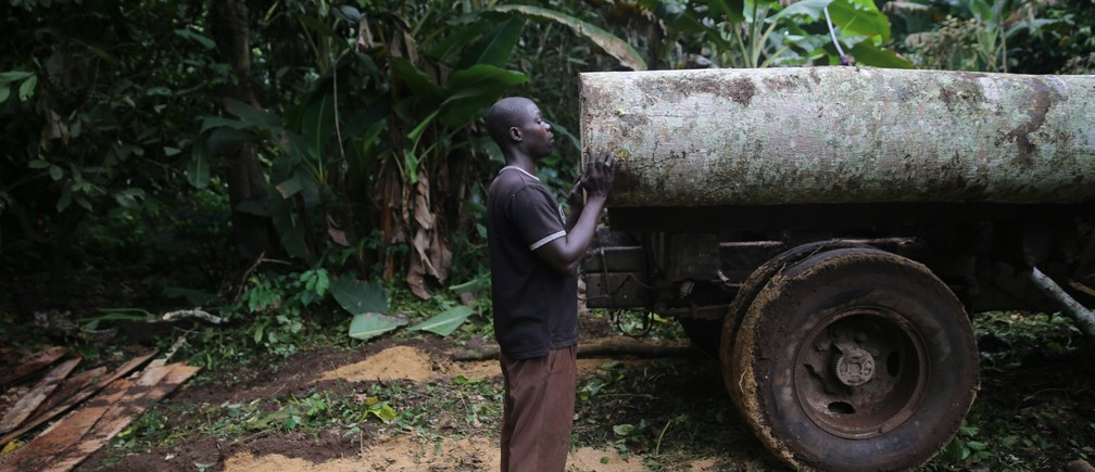 A labourer supports a log as it is moved into a truck in an unreserved forest in Igede-Ekiti township, southwest Nigeria, August 19, 2014.