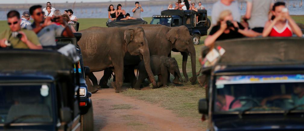 Una manada de elefantes salvajes pasa junto a los jeeps de safari de los turistas en el parque nacional de Kaudulla en Habarana, Sri Lanka, el 6 de agosto de 2019.