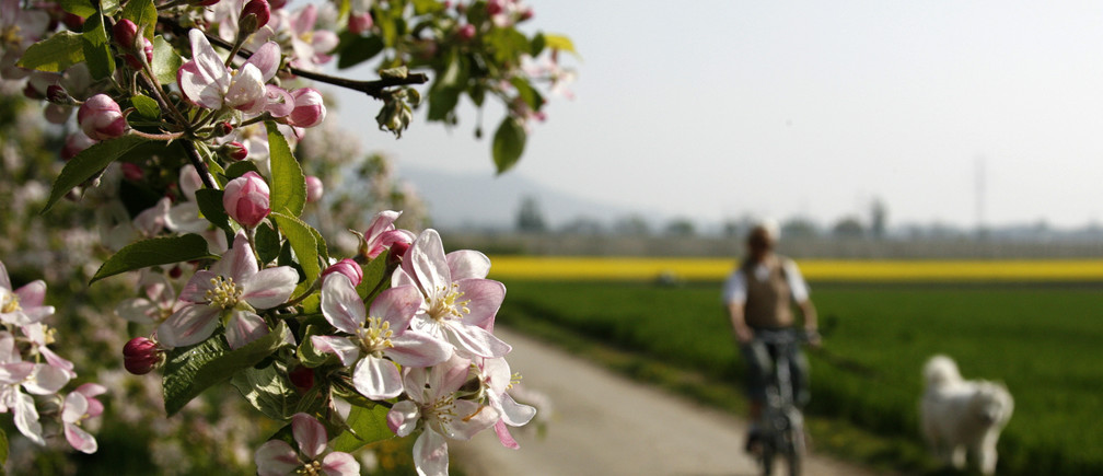 A man cycles with his dog past a blooming apple tree during a spring morning in Luins near Geneva April 23, 2009. REUTERS/Denis Balibouse (SWITZERLAND ENVIRONMENT) - BM2E54N0WOK01