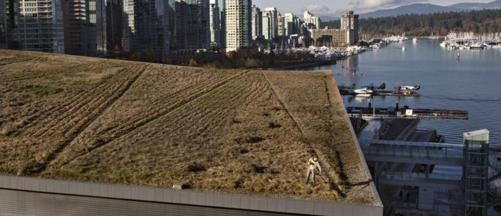 Landscaper Kim Noble grooms the grass after it was given its annual mowing on the roof of the Vancouver Convention Centre in Vancouver, British Columbia November 15, 2012. The six acre roof is one of the 10 largest green roofs in the world with some 400,000 indigenous plants and grasses that includes four beehives.  REUTERS/Andy Clark    (CANADA - Tags: SOCIETY ENVIRONMENT TPX IMAGES OF THE DAY) - GM1E8BG0D2V01