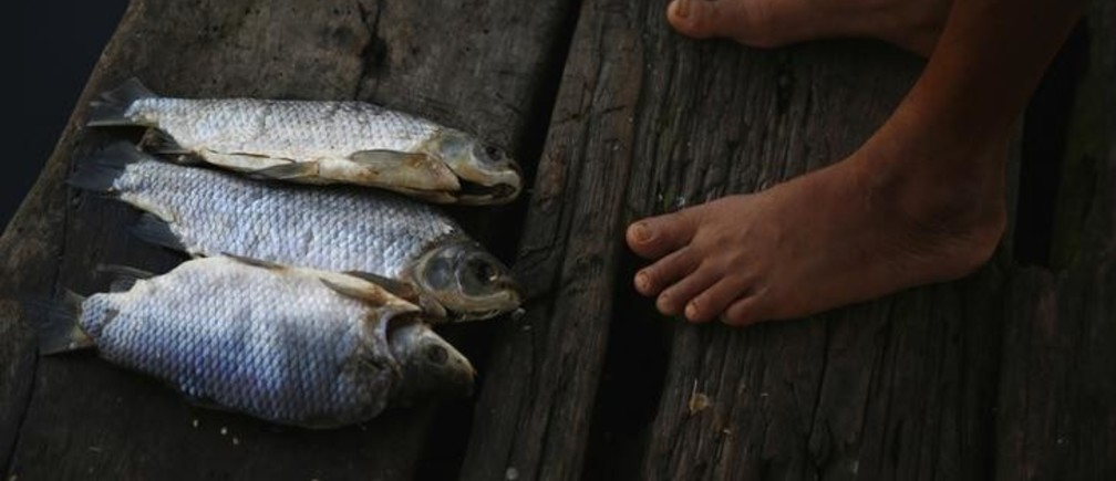 A woman stands next to fish which were left on the dock of her stilt house in the village of Ologa in the western state of Zulia October 23, 2014. This year the Catatumbo Lightning was approved for inclusion in the 2015 edition of Guinness World Records, dethroning the Congolese town of Kifuka as the place with the world's most lightning bolts per square kilometer each year at 250. Scientists think the Catatumbo, named for a river that runs into the lake, is normal lightning that just happens to occur far more than anywhere else, due to local topography and wind patterns.  Picture taken October 23, 2014.  REUTERS/Jorge Silva (VENEZUELA - Tags: SOCIETY ENVIRONMENT)ATTENTION EDITORS: PICTURE 14 OF 20 FOR WIDER IMAGE PACKAGE 'VENEZUELA'S ETERNAL STORM'  TO FIND ALL IMAGES SEARCH 'CATATUMBO LIGHTNING'