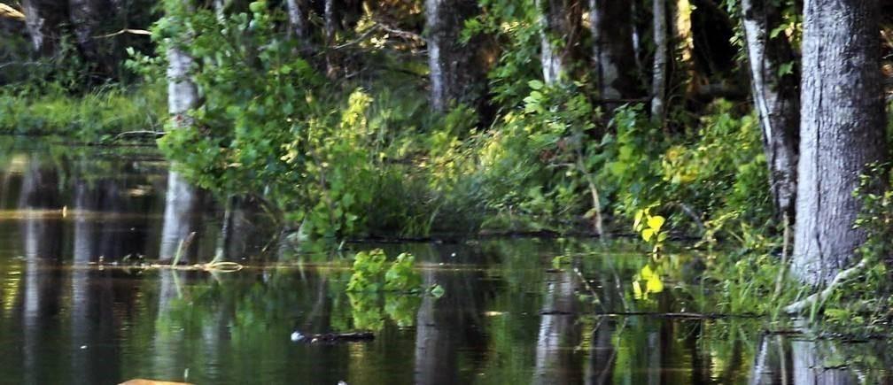 气候变化导致植物吸收过多的水分