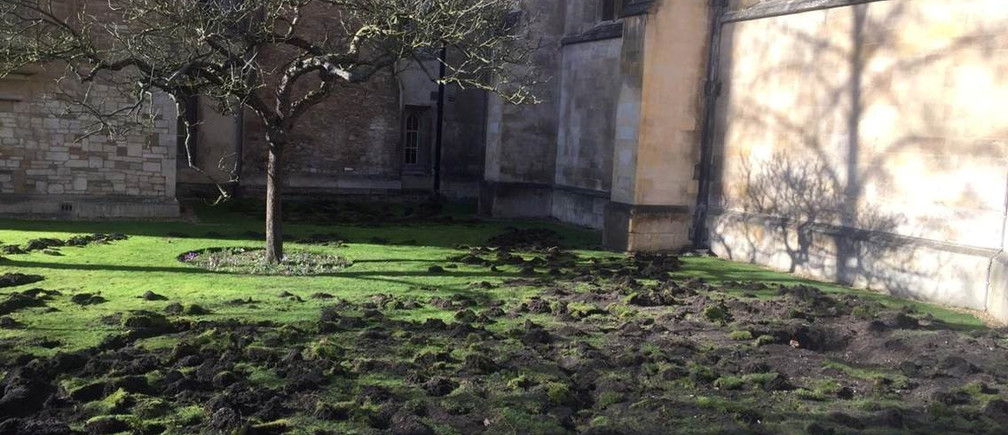 The lawn of Trinity College is seen after being dug up by Extinction Rebellion climate protesters, in Cambridge, Britain February 17, 2020 in this picture obtained from social media by REUTERS   THIS IMAGE HAS BEEN SUPPLIED BY A THIRD PARTY. MANDATORY CREDIT - RC2F2F970DEA