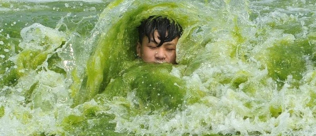 A boy plays on a algae-covered beach in Qingdao, Shandong province, China, July 18, 2016. Picture taken July 18, 2016.