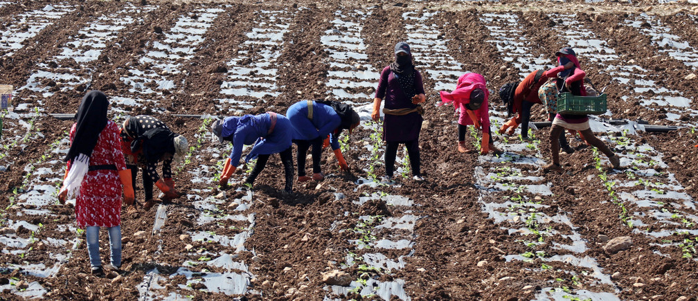 Syrian refugee women and children work in a field in Al-Khiam village, near the Israeli border in south Lebanon October 13, 2017. REUTERS/Russell Boyce - RC1DCDA1D830