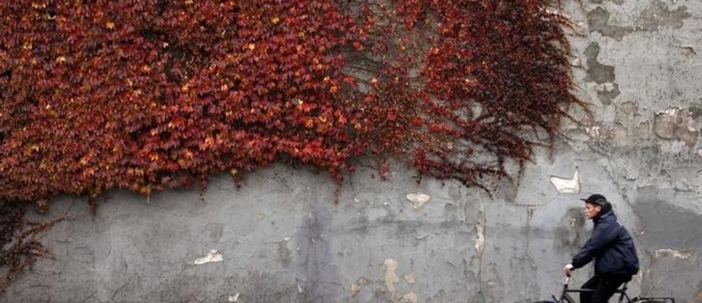 A cyclist rides past autumn-colored ivy climbing the wall of a building in downtown Copenhagen November 2, 2010.  REUTERS/Bob Strong  (DENMARK - Tags: ENVIRONMENT TRANSPORT SOCIETY)