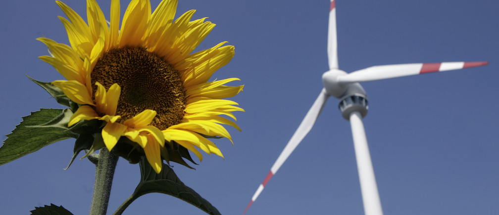 A sunflower blooms in front of a wind generator in Bruck and der Leitha, some 40km east of Vienna