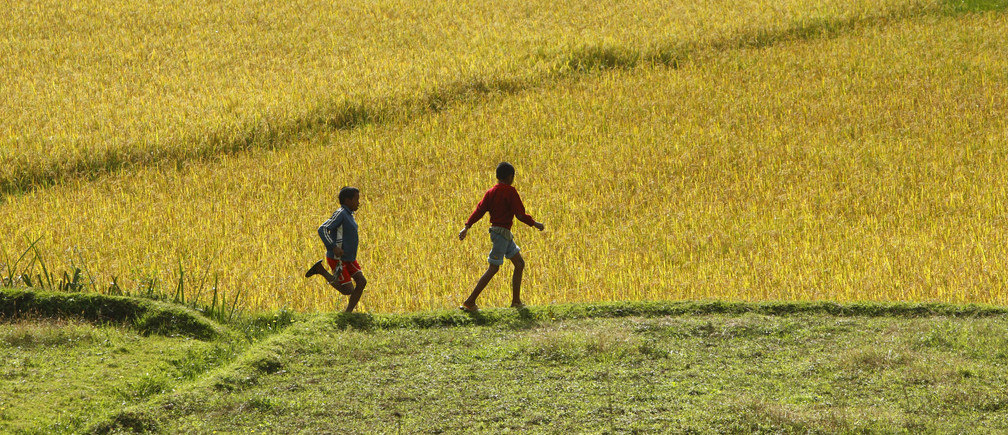 Children run alongside a rice paddy field outside the village of Andriampamaky, around 50 km (31 miles) north of Madagascar's capital city Antananarivo April 21, 2012. According to the African Jesuit AIDS Network, the Jesuits run a rural development project in the village combating poverty and hunger, giving animals, seeds and tools to villagers in an attempt to empower the villagers to earn some money, and in doing so, help prevent the spread of HIV and AIDS. REUTERS/Darrin Zammit Lupi (MADAGASCAR - Tags: AGRICULTURE SOCIETY) MALTA OUT. NO COMMERCIAL OR EDITORIAL SALES IN MALTA - GM1E84M0A6Q01