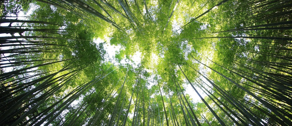 Inside a forest, looking upwards.