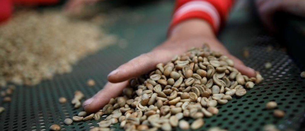 Workers sort arabica green coffee beans at a coffee mill in Pangalengan, West Java, Indonesia May 8, 2018.