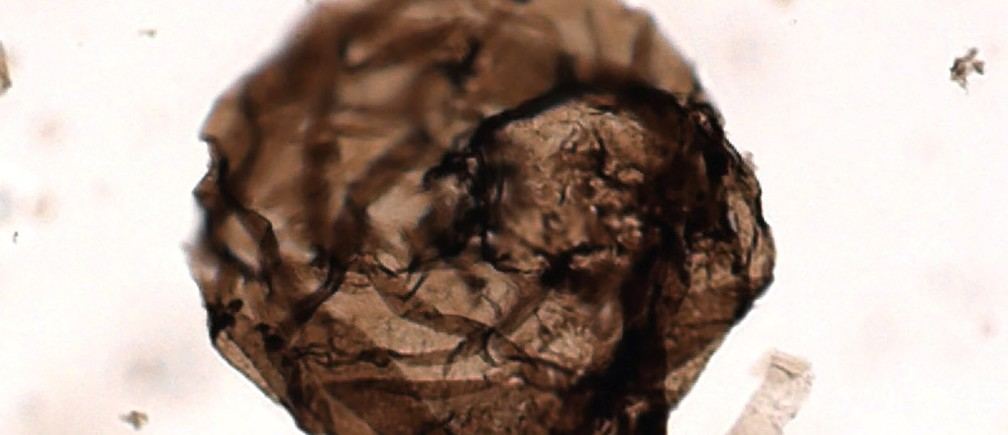 This billion-year-old microscopic fossil fungus was unearthed in the North Territories of Canada.