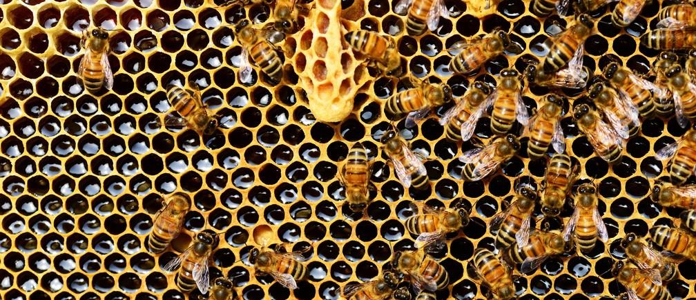 Las abejas son los polinizadores más importantes del planeta.