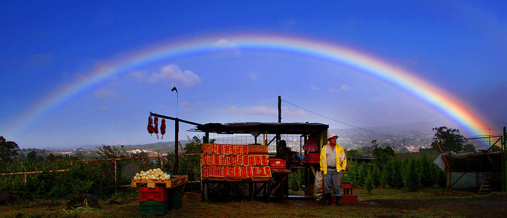 A Costa Rican farmer sells his freshly harvested tomatoes along the side of the road near San Jose, March 14, 2003. Pictures of the Year 2003