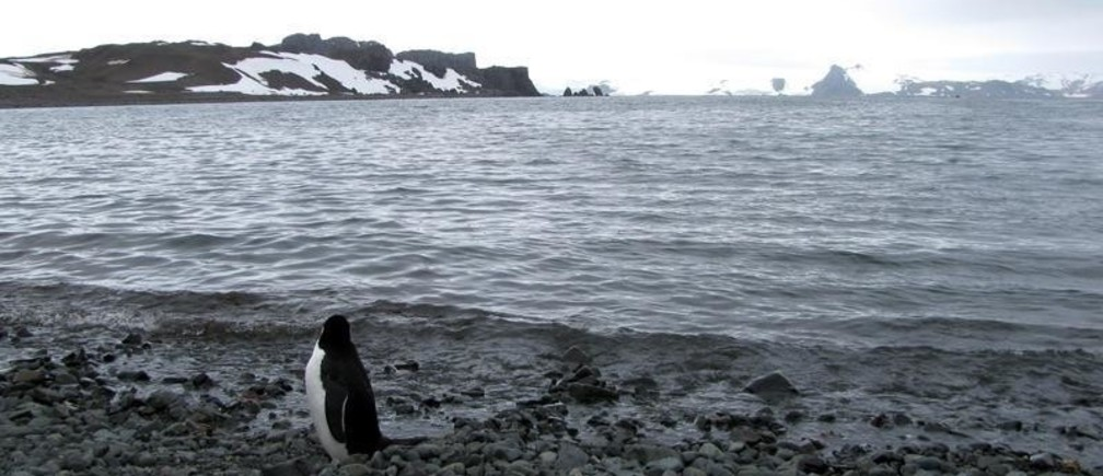 A penguin is seen near Argentina's Carlini Base in Antarctica, January 12, 2017. Picture taken January 12, 2017 REUTERS/Nicolas Misculin - RC1FB5F21760