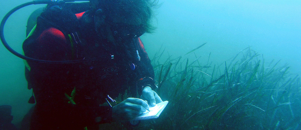 An environment technician diver takes notes next to an oceanic posidonia plant in Almeria coast, southeast Spain June 23, 2006. REUTERS/Francisco Bonilla - GM1DSWXFDDAA