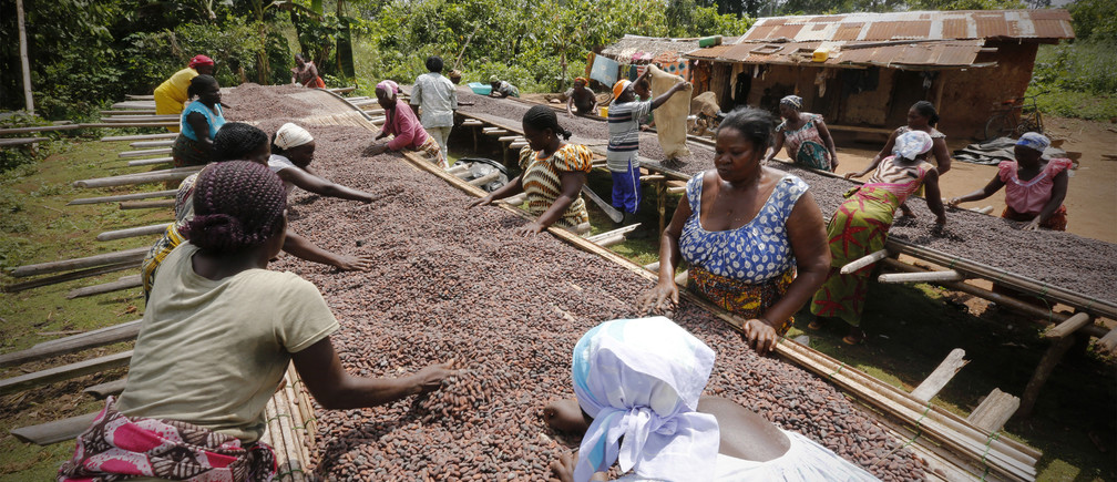 Women from a local cocoa farmers association called BLAYEYA work with cocoa beans in Djangobo, Niable in eastern Ivory Coast, November 17, 2014. BLAYEYA is a women's only association with each member owning a field and planting cocoa. Picture taken November 17, 2014. REUTERS/Thierry Gouegnon (IVORY COAST - Tags: BUSINESS AGRICULTURE FOOD SOCIETY) - GM1EABI1NFD01