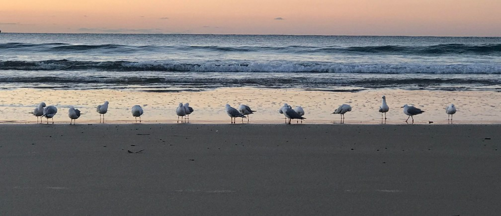 white-and-gray birds on shore