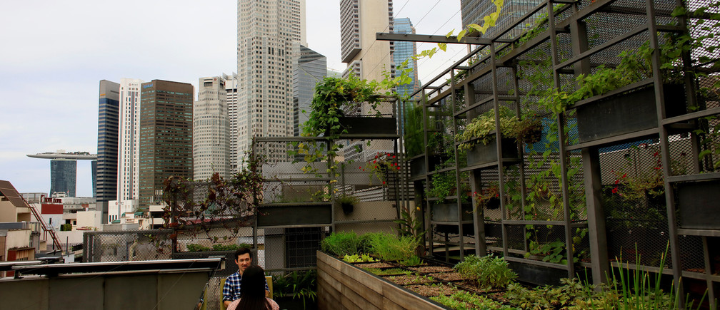 An urban farm is seen on the roof of WOHA Architects in Singapore June 2, 2017. REUTERS/Thomas White - RTX38OR6