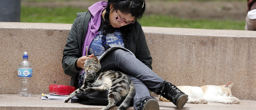 A student reads next to cats at Kennedy park in Miraflores district in Lima, September 24, 2014.  REUTERS/ Mariana Bazo  (PERU - Tags: SOCIETY ANIMALS) - RTR47L7X