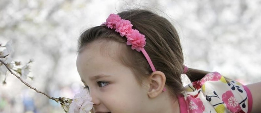 Maren Delisle, 3, of Dayton, Ohio takes a whiff of cherry blossoms along the Tidal Basin in Washington in April 2, 2010. REUTERS/Yuri Gripas  (UNITED STATES - Tags: SOCIETY ENVIRONMENT IMAGES OF THE DAY) - GM1E64307PL01