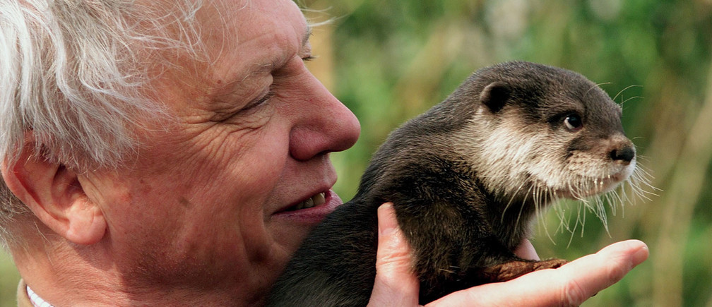 Famous naturalist Sir David Attenborough holds 'Little Bee' a baby Asian Otter during an event by the river Thames near Windsor March 23. A scheme was announced today in an attempt to help return otters back to the river Thames where numbers have been dwindling for years.