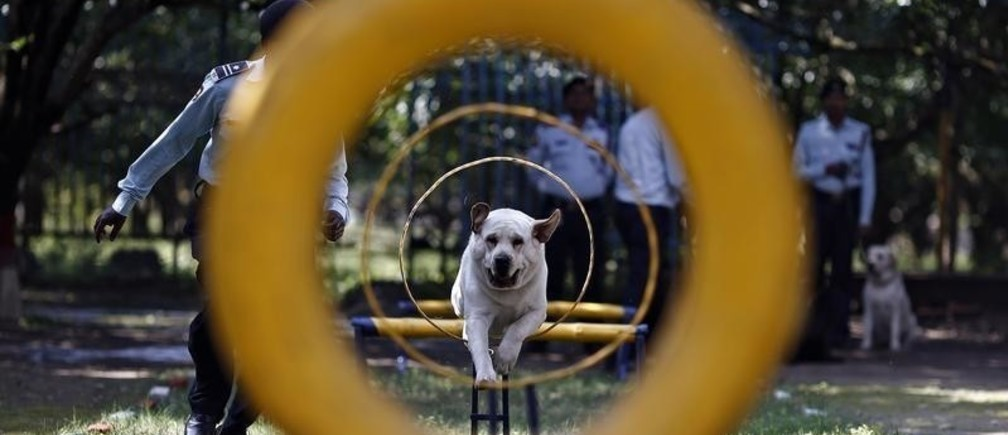 A man trains his dog during a training session at the training academy of the Security and Intelligence Services (India) firm, at Dehradun in the Himalayan Indian state of Uttarakhand February 28, 2014. India's northern Hindi-speaking belt, home to around half a billion people, is taking off after decades of trailing industrialised seaboard states in the west and south. Picture taken February 28, 2014.  To match story INDIA-BUSINESS/NORTH      REUTERS/Adnan Abidi (INDIA - Tags: BUSINESS POLITICS ANIMALS) - GM1EA34027B01