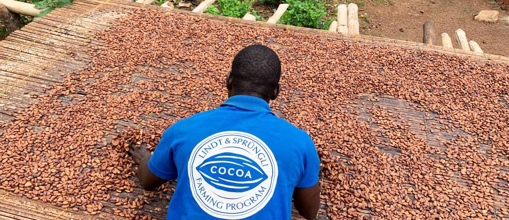 A Ghanian farmer dries cocoa beans.