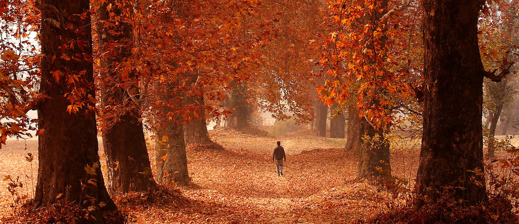 A man walks through a garden on an autumn day in Srinagar, Indian-administered Kashmir, November 15, 2016. REUTERS/Danish Ismail     TPX IMAGES OF THE DAY - D1BEUMYSKWAA