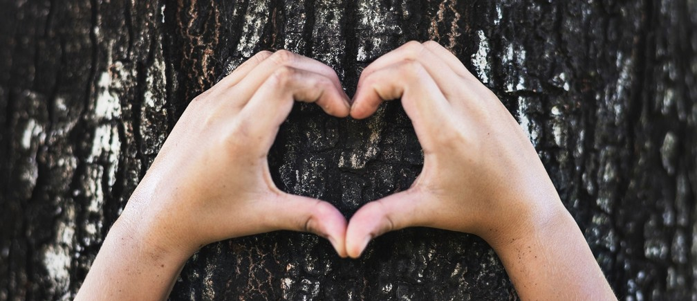 A child's hands making a heart sign on a tree.
