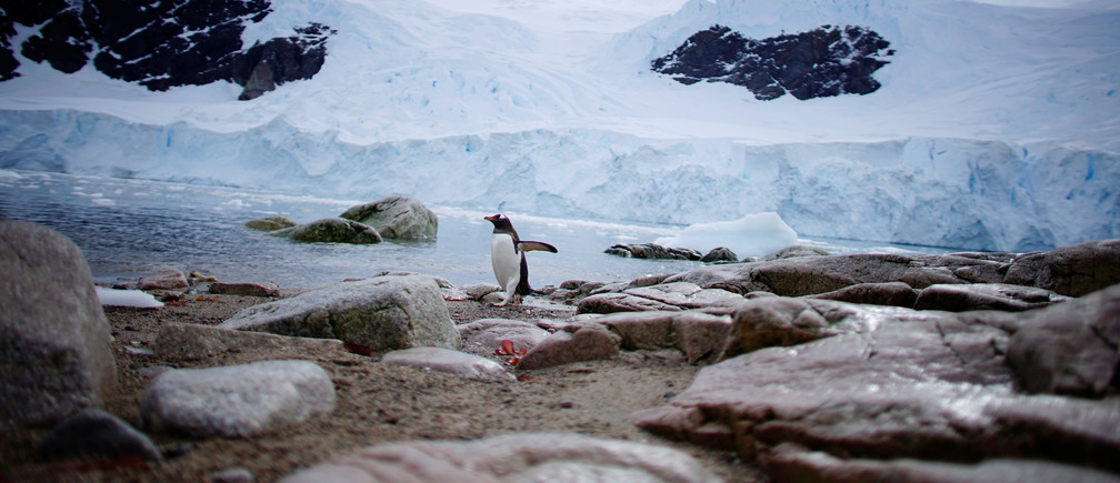 A penguin comes ashore in Neko Harbour, Antarctica environment renewable solar energy change transition friendly environment carbon footprint carbon emissions reduction change natural climate change global warming air pollution clean energy power renewables plastic plastics