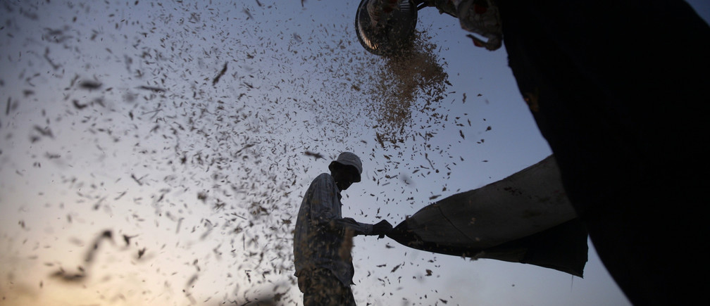 Labourers sift harvested wheat in a field on the outskirts of the western Indian city of Ahmedabad March 14, 2013. India is holding firm to a price of $300 a tonne for its wheat despite falling global prices, setting the scene once again for piles of rotting grain, even though it needs to feed its half-a-billion poor. REUTERS/Amit Dave (INDIA - Tags: BUSINESS FOOD AGRICULTURE) - GM1E93E1SCU01