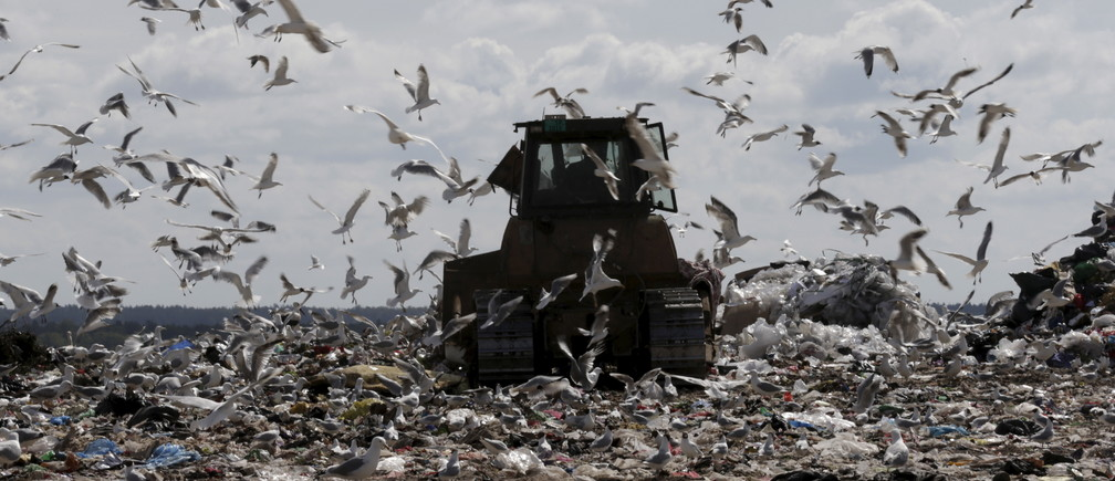 "Seagulls fly around as a tractor works in the landfill of waste management company ""Getlini EKO"" in Riga, Latvia, June 30, 2015."