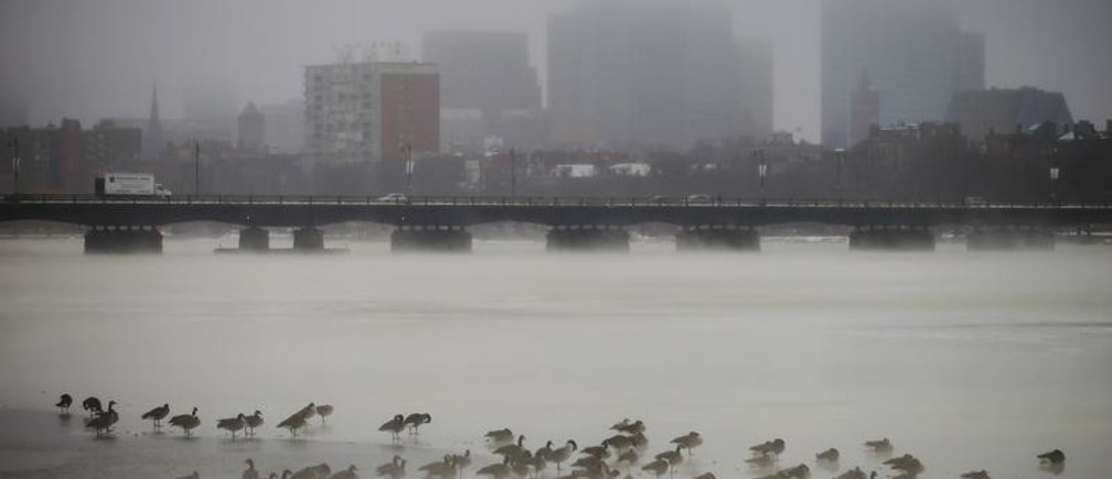 Birds gather on the partially frozen Charles River in front of the Boston skyline during winter in Cambridge, Massachusetts January 6, 2014.  REUTERS/Brian Snyder  (UNITED STATES - Tags: ENVIRONMENT ANIMALS CITYSCAPE TPX IMAGES OF THE DAY) - GM1EA1701SQ01