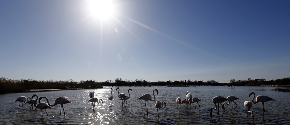 Nature climate change - Camargue