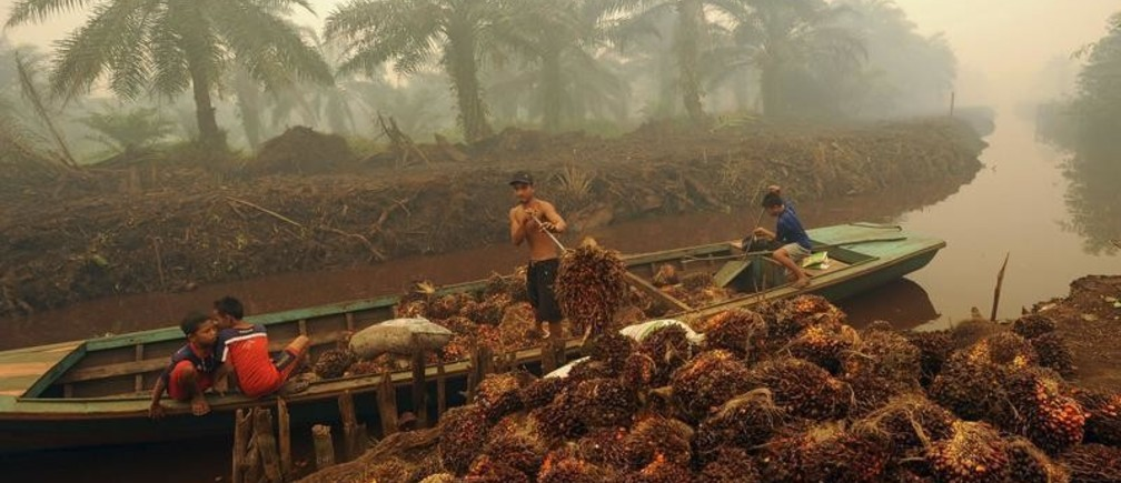 A worker unloads palm fruit at a palm oil plantation in Peat Jaya, Jambi province on the Indonesian island of Sumatra September 15, 2015 in this photo taken by Antara Foto. Home to the world's third-largest tropical forests – and the world's fifth-largest emitter of greenhouse gases mainly due to their destruction - Indonesia will be one of the countries in the spotlight at December's U.N. climate change conference in Paris. The meeting will try to get legally binding commitments from the 190 member nations to slash greenhouse gases. To match Insight INDONESIA-FORESTS/ Picture taken September 15, 2015. REUTERS/Wahyu Putro A/Antara FotoATTENTION EDITORS - THIS IMAGE HAS BEEN SUPPLIED BY A THIRD PARTY. IT IS DISTRIBUTED, EXACTLY AS RECEIVED BY REUTERS, AS A SERVICE TO CLIENTS. FOR EDITORIAL USE ONLY. NOT FOR SALE FOR MARKETING OR ADVERTISING CAMPAIGNS. MANDATORY CREDIT. INDONESIA OUT. NO COMMERCIAL OR EDITORIAL SALES IN INDONESIA. - GF10000232686