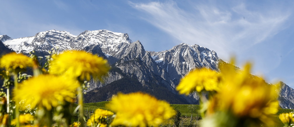 Flowers are pictured in front of the snow covered Bettelwurf mountain summit in the western Austrian village of Absam April 29, 2015. REUTERS/Dominic Ebenbichler - GF10000077542