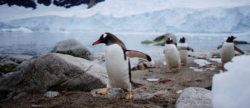 Penguins come ashore in Neko Harbour, Antarctica, February 16, 2018. REUTERS/Alexandre Meneghini