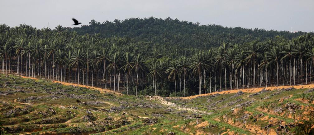 A land clearance at a Malaysian palm oil plantation.
