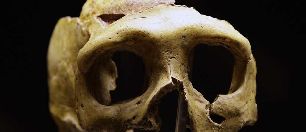 The replica of a neanderthall skull is displayed in the new Neanderthal Museum in the northern Croatian town of Krapina.