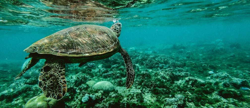 La protección de los ecosistemas marinos representa un gran desafío para la comunidad internacional.