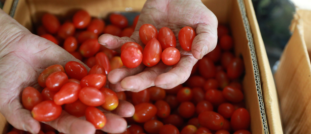 A vendor shows cherry tomatoes at a market in Singapore January 29, 2018. REUTERS/Soe Zeya Tun