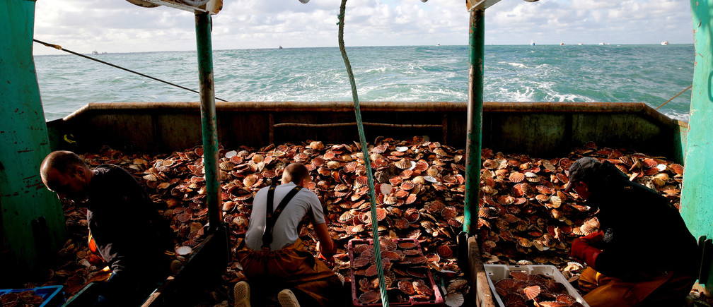French fishermen sort scallops on board a trawler.