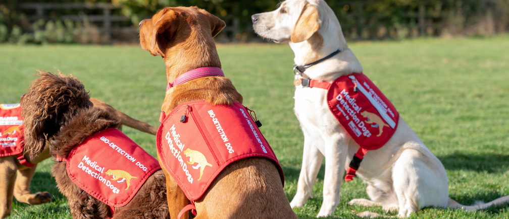 Dogs from charity Medical Detection Dogs, are seen in Milton Keynes, Britain, October 22, 2018. REUTERS/Matthew Stock - RC15A9FCA500