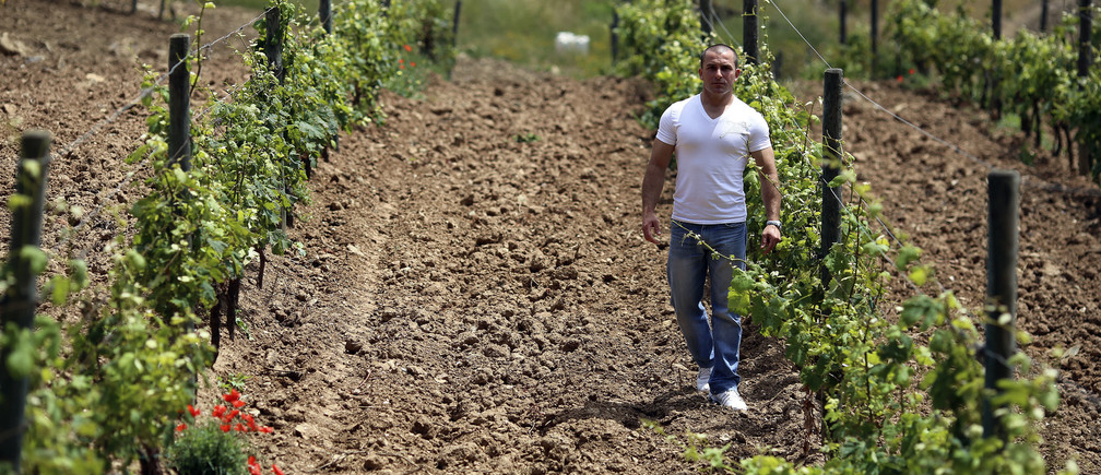 Francesco Papa, a prisoner on penal colony, walks between rows of grapevines in winemaker Marquise Lamberto Frescobaldi's vineyard on Gorgona island June 11, 2013. Gorgona, the smallest of the Tuscan archipelago that also includes Elba, where Napoleon was incarcerated, is home to a project to rehabilitate hardened criminals through agriculture. The island, an isolated refuge for monks for 1,500 years and a penal colony since 1869, has just produced 2,700 bottles of a crisp white wine called Gorgona with the help of a 700-year-old Italian wine dynasty. Picture taken June 11, 2013. To match Feature ITALY-PRISON/VINEYARD       REUTERS/Alessandro Bianchi (ITALY - Tags: SOCIETY CRIME LAW AGRICULTURE) - GM1E96F09QV01