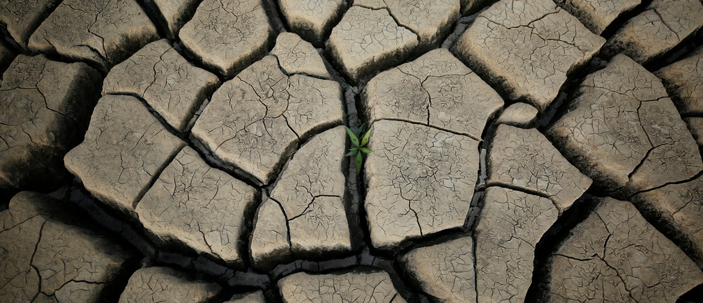A plant grows between cracked mud in a normally submerged area at Theewaterskloof dam near Cape Town, South Africa.