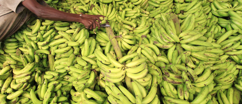 A vendor displays bananas at his stall in Somalia capital Mogadishu as Muslims prepare for the fasting month of Ramadan, the holiest month in the Islamic calendar, July 8 2013. REUTERS/Feisal Omar (SOMALIA - Tags: FOOD SOCIETY RELIGION) - GM1E9781JQ301