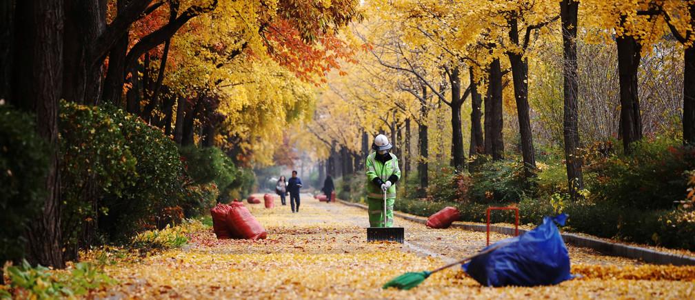 A cleaner sweeps fallen leaves on a late autumn day in Seoul, South Korea, November 7, 2018.    REUTERS/Kim Hong-Ji - RC167DD97B00